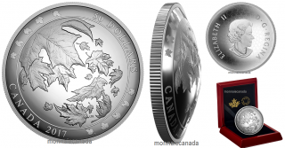 2017 - $50 - Pure Silver Convex Coin - Maple Leaves in Motion