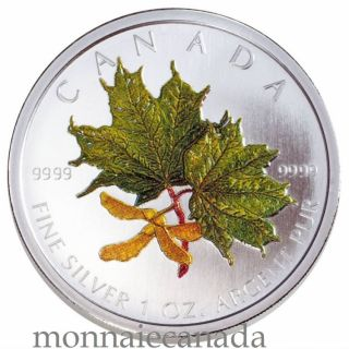 2002 - SPRING COLORED MAPLE LEAF $5 FINE SILVER .9999
