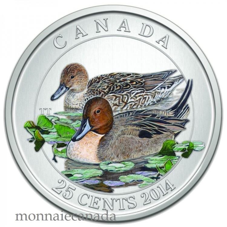 2014 - 25 Cents Pièce colorée - Le canard pilet