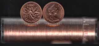 1977 Canada 1 Cent - BU ROLL 50 Coins - UNC - in Plastic Tube