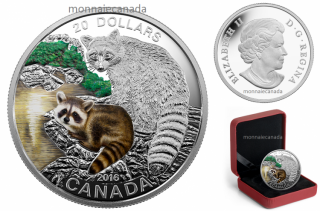 2016 - $20 - 1 oz. Fine Silver Coloured – Baby Animals - Baby Raccoon