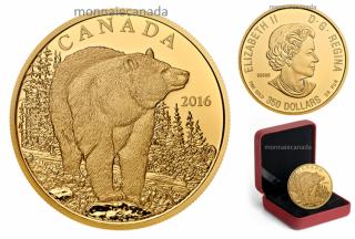 2016 - $350 - Pièce en or pur à 99,999 % – L'imposant ours noir