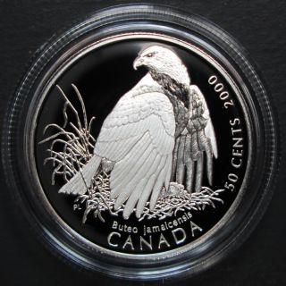 2000 Canada 50 Cents Sterling Silver - Red-Tailed Hawk - Canada's Birds of Prey