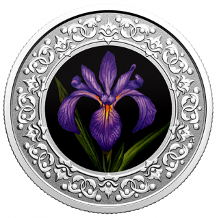 2020 - $3 -   Pure Silver Coloured Coin – Blue Flag Iris: Floral Emblems of Canada: Quebec