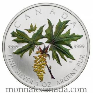 2005 - $5 Silver Maple leaf colored coin Giant of the Forest The bigleaf maple