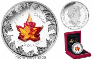 2016 - $50 - 5 oz. Pure Silver Coin – Murano Maple Leaf: Autumn Radiance
