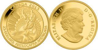 2013 - $25 - Pièce en or pur - Antilocapre