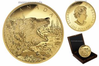 2016 - $1250 - Pièce de un demi-kilogramme en or pur – Le grondement du grizzli