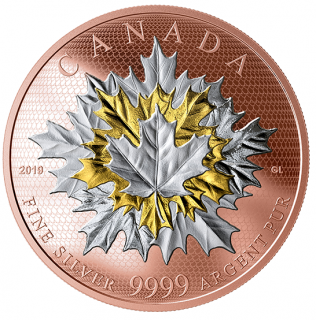 2019 - $50 - Pure Silver Gold Plated Coin - Maple Leaves in Motion