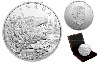 2016 - $125 - Pièce de un demi-kilogramme en argent fin – Le grondement du grizzli