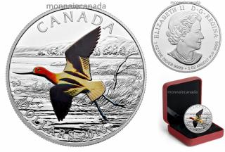 2016 - $20 - 1 oz. Pure Silver Coloured Coin – Colourful Birds of Canada: American Avocet