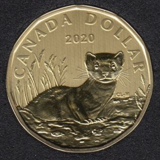 2020 - Specimen - Black-Footed Ferret - Canada Dollar