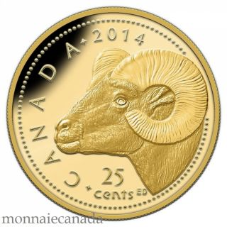 2014 - 25 Cents - 0.5 g Pure Gold Coin - Rocky Mountain Bighorn Sheep